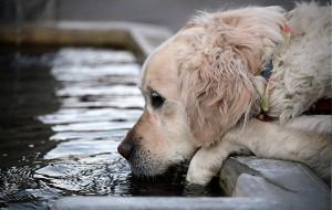 agua-para-perros_web_