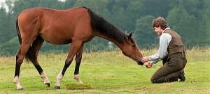war-horse-caballo-de-batalla-pelicula-18